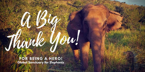 Thank you image from the Global Sanctuary for Elephants