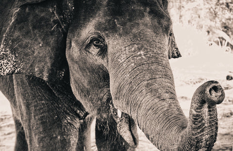 beautiful-black-and-white-image-of-an-elephant