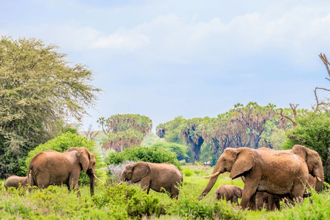 elephant family in the wilderness_Photo by Photos By Beks on Unsplash