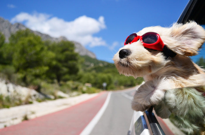 Tips When Traveling With Your Dog