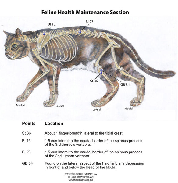 Feline Acupressure Healthcare By Nancy Zidonis and Amy Snow