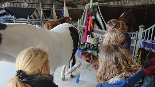 EQUINE Meridians & Specific Conditions: 19 to 22 April 2021, Surrey, UK £850