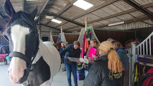 Intro EQUINE Acupressure: 14-15 Mar 2020. Woking, Surrey. £350