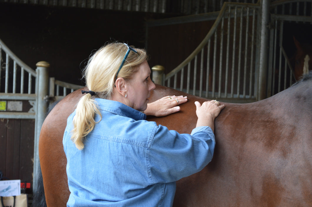 *NEW COURSE* Virtual Hands-on to Equine Acupressure Course