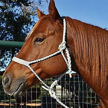 Professional's Choice Cowboy White Mule Tape Halter - Animal Health Express