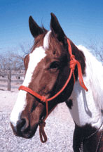Mule Rope Halter - Animal Health Express