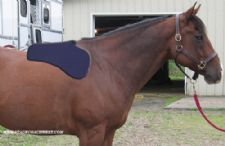 Impact Gel Western Shoulder Bridge Pad - Animal Health Express