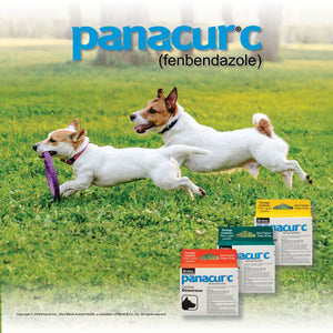 SafeGuard Canine Dewormer - Animal Health Express