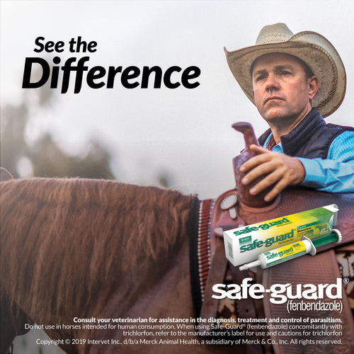 Safe-Guard Paste - Animal Health Express