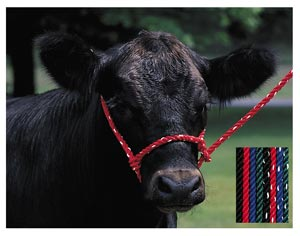 Rope Halter – Cow - Animal Health Express