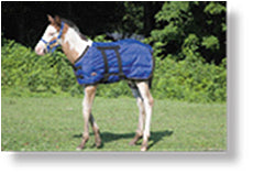 Load image into Gallery viewer, Foal Blanket - Animal Health Express