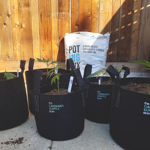 Pot-Ing Mix | Soil Medium for Cannabis