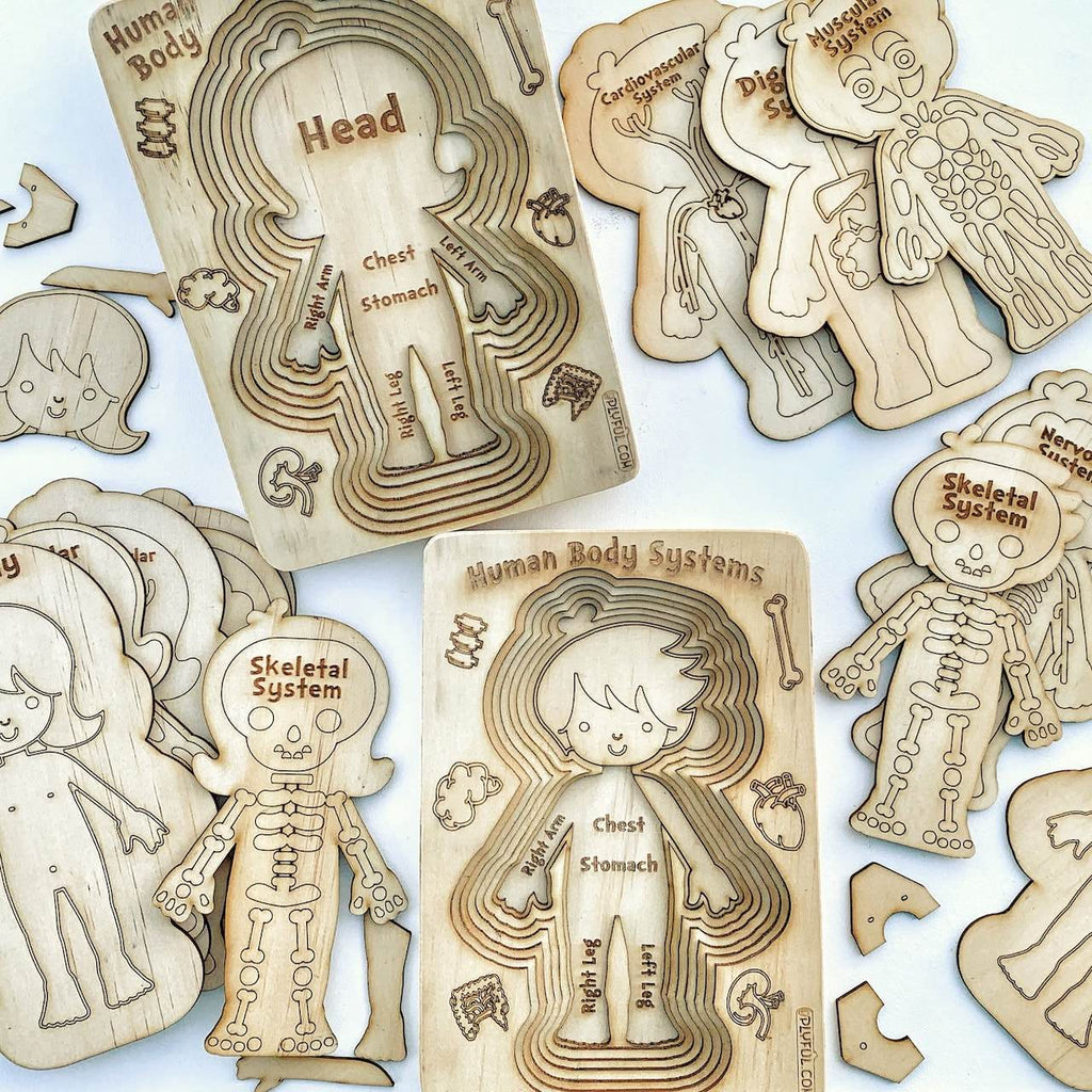 Human Body Systems - A 'sliced' Wooden Human Layered Puzzle Plyful Male