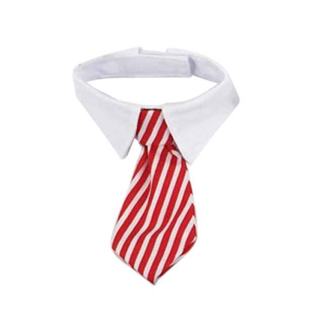 Cotton Collar Tie