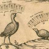 Forging music for Columbidae<br>{December 2, 2012}