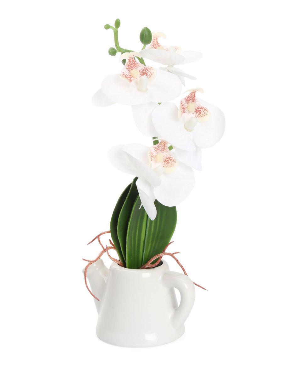Orchid Tepot Potted Plant (White)