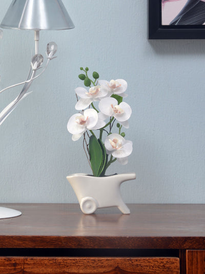 Orchid Cart Potted Plant (White)