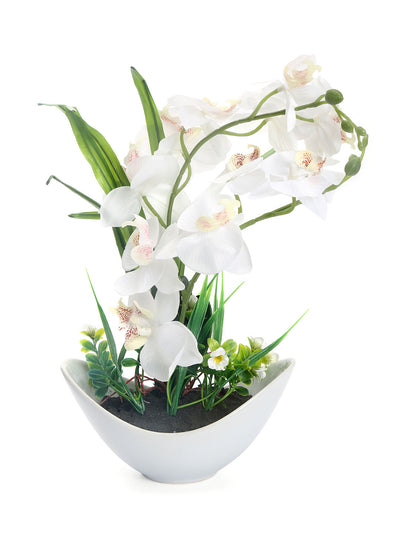 Bowl Orchid Potted Plant (White)