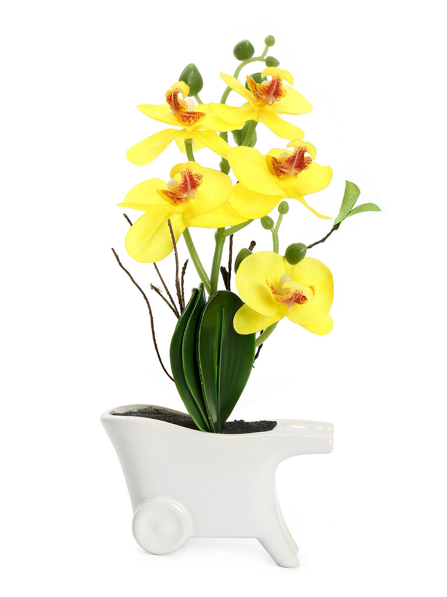 Cart Orchid Potted Plant (Yellow)