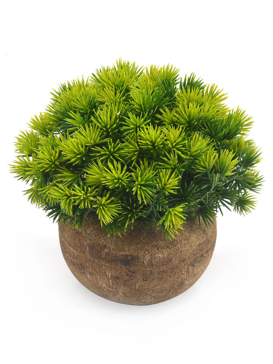 Boxwood Potted Plant (Brown)