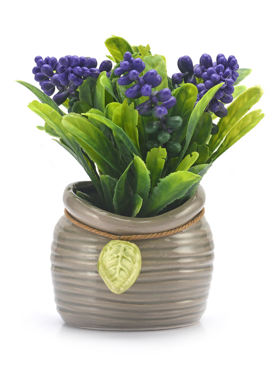 Potli Flora Potted Plant (Blue)