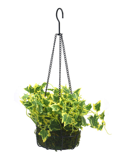 Ivy Hanging Potted Plant (Green)