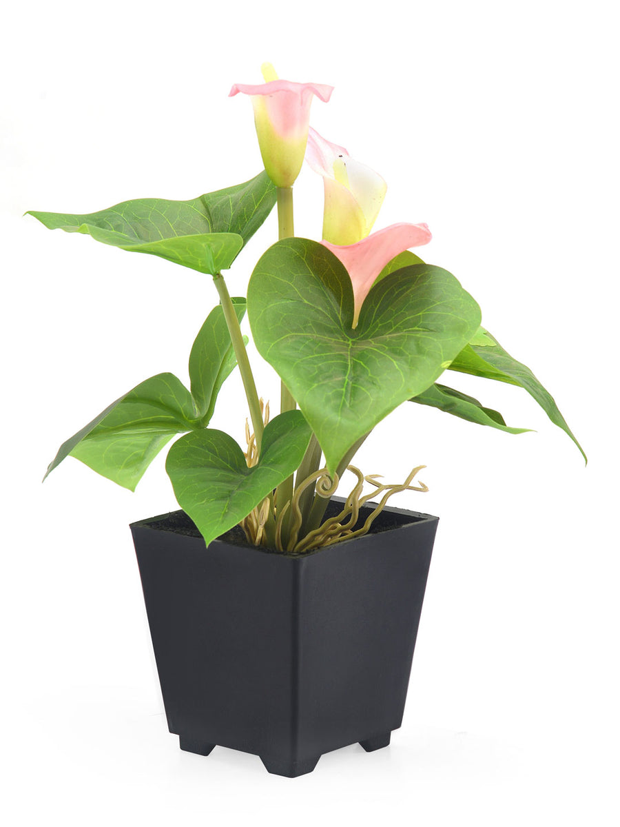 Liliy Potted Plant (Pink)