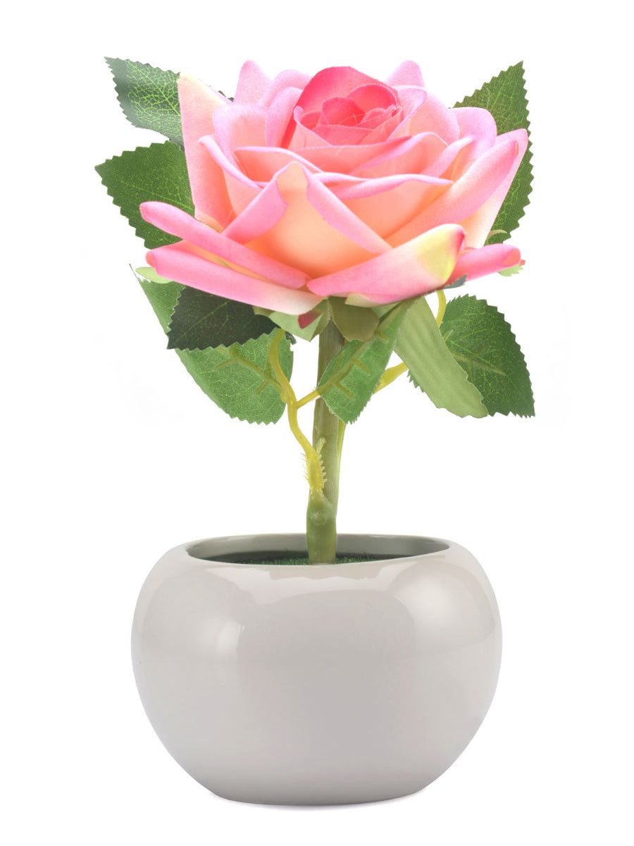 Rose Potted Plant (Pink)