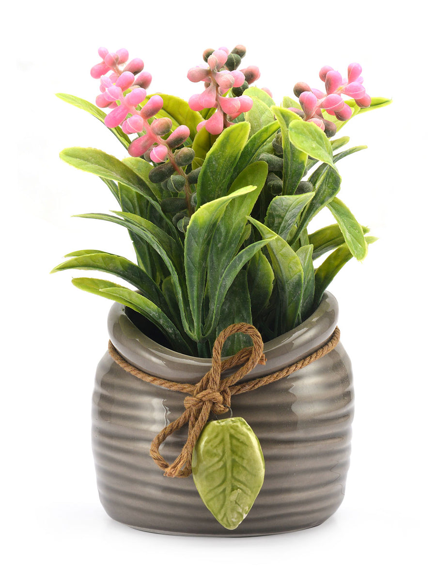 Flora Potli Potted Plant (Pink)