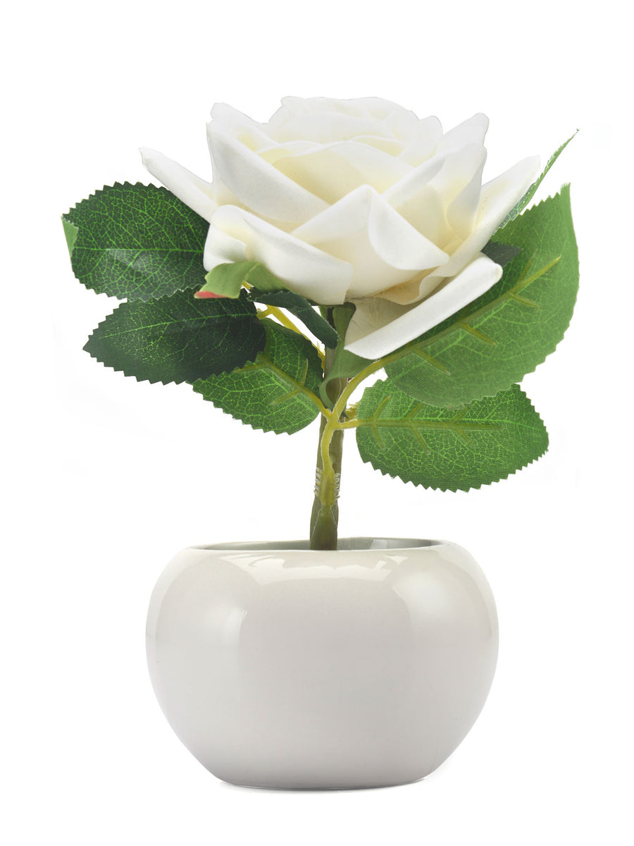 Rose Potted Plant (White)