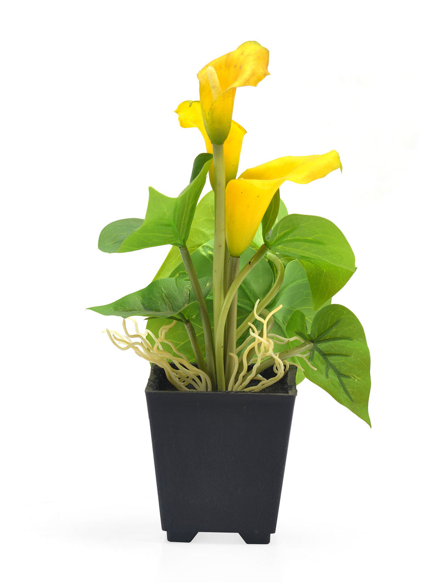 Liliy Potted Plant (Yellow)