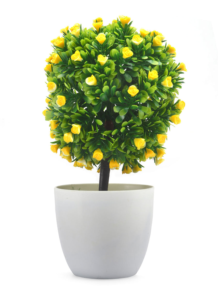 Boxwood Flora Potted Plant (Yellow)