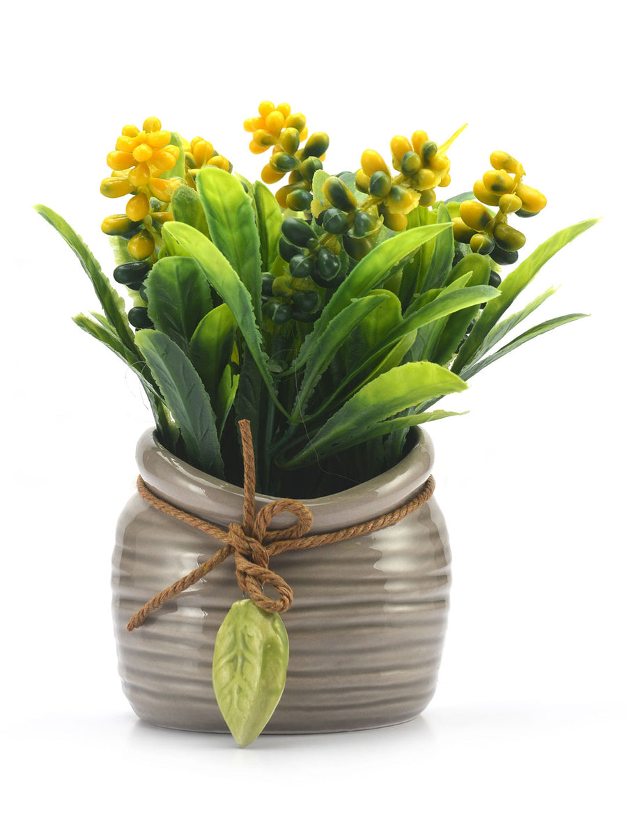 Potli Flora Potted Plant (Yellow)