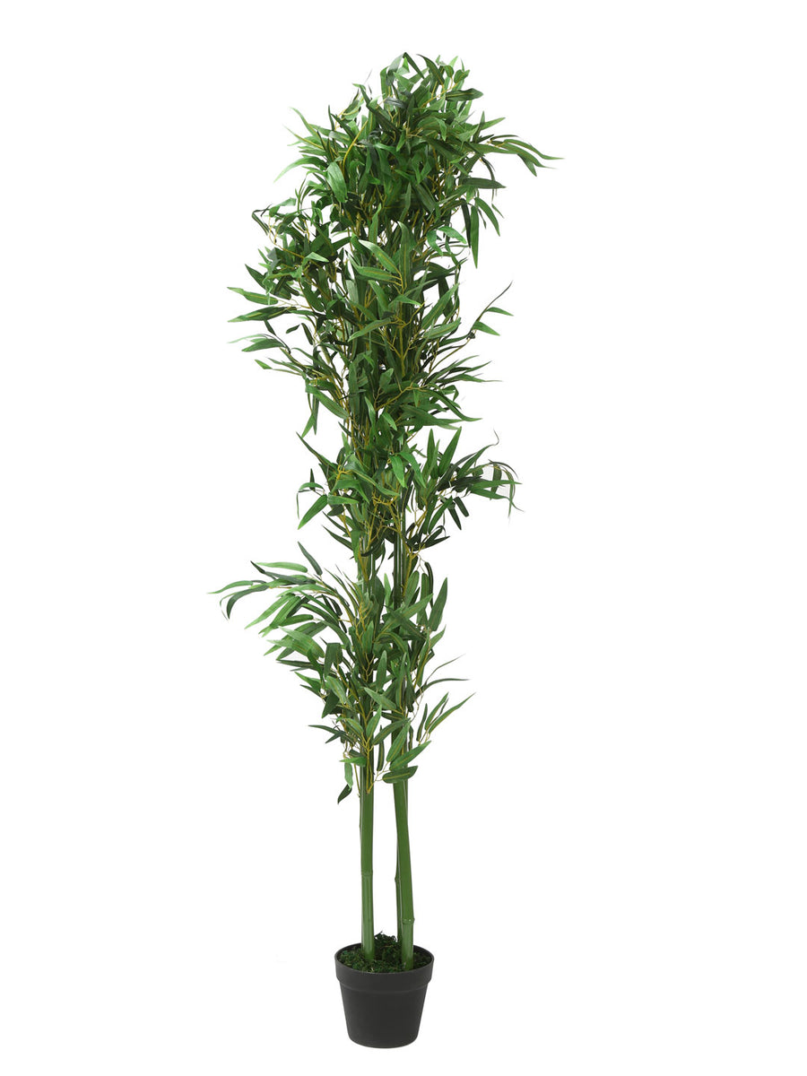 Bamboo Tree (Green)