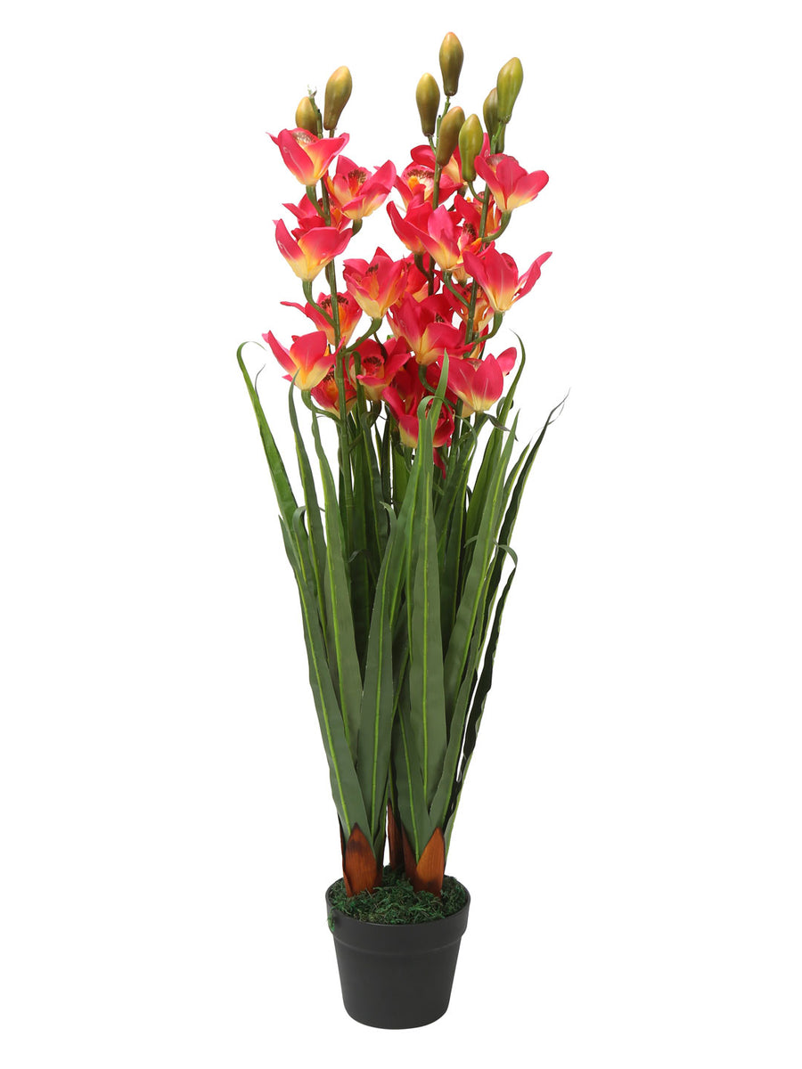 Cybidium Tree (Pink)
