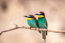Laden Sie das Bild in den Galerie-Viewer, Bee-Eater Couple