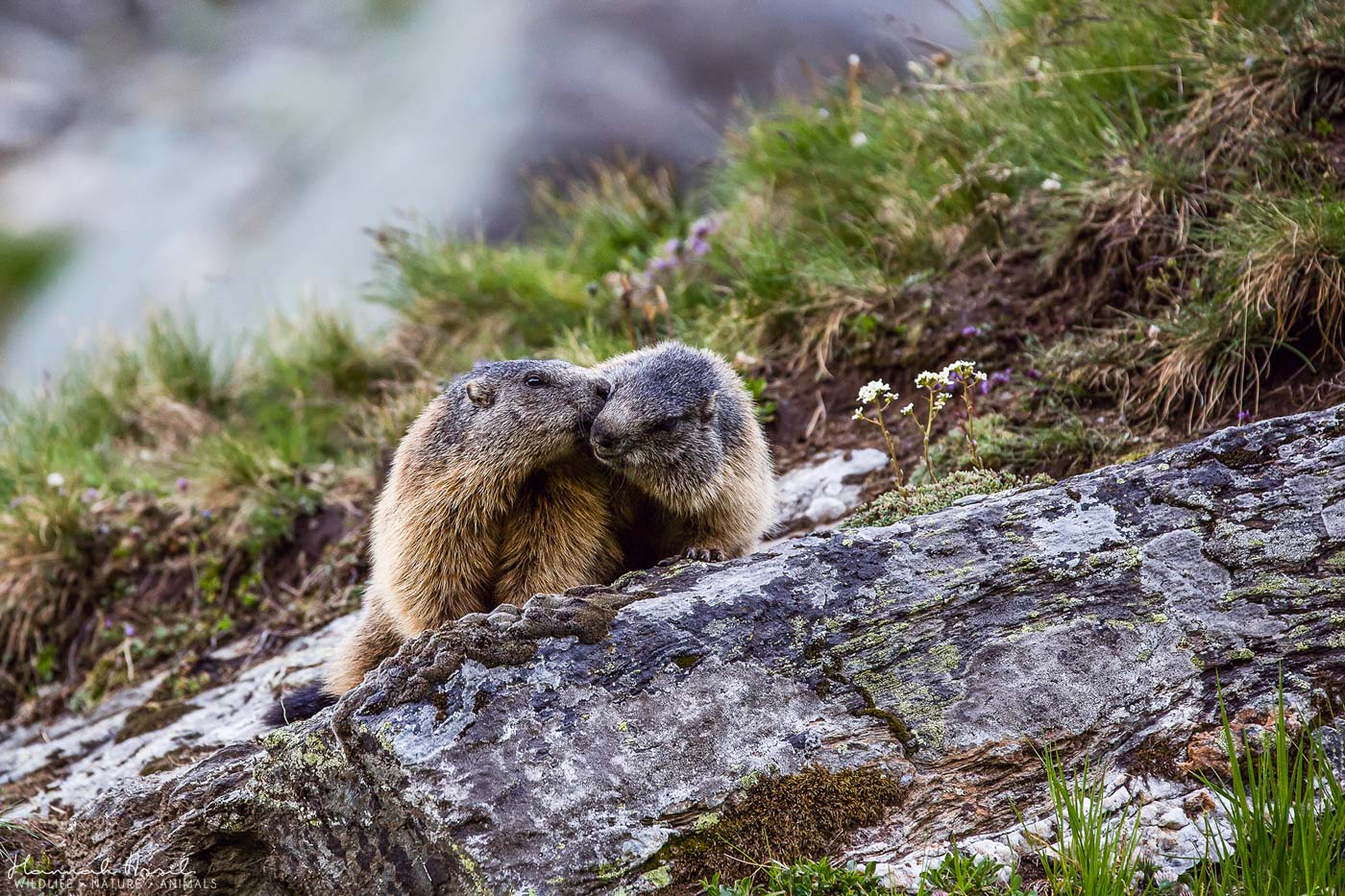 Groundhog Couple