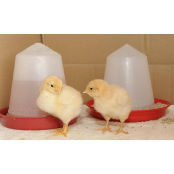 Chicken Feeder & Drinker Set - 1kg  & 1Ltr - 226 & 203