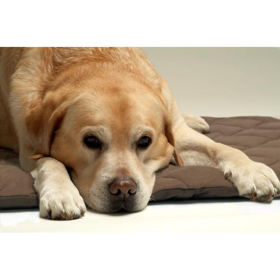Petlife Flectabed Q Heat Reflective Quilted Thermal Bed - BROWN