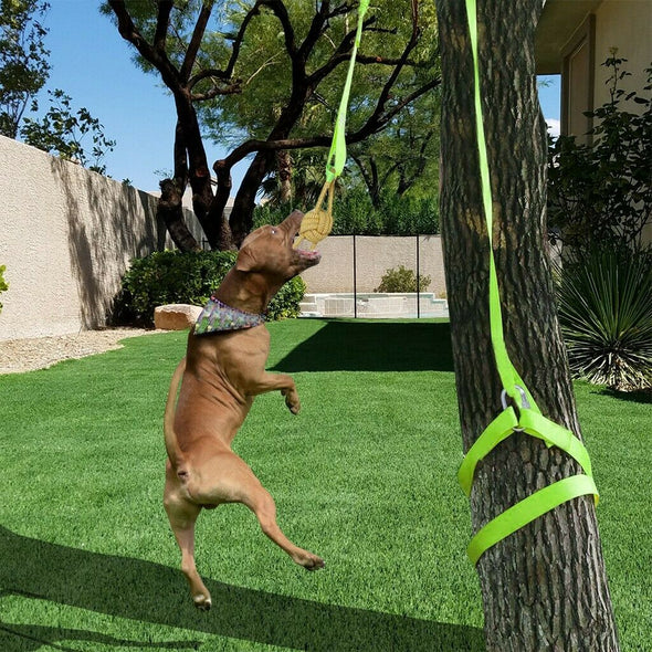 Retractable Interactive Dog Toy, Rope Tug Of War Toys For Medium Or Large Dog US picktookshop.myshopify.com [sale] [online]