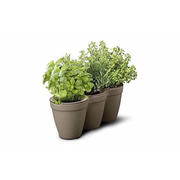 "ivy Herbs 13"" Taupe Planter"