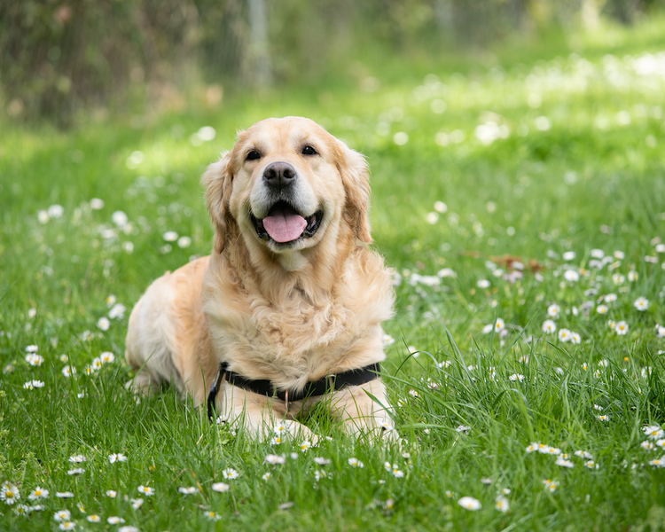 3 reasons to use collagen for dogs