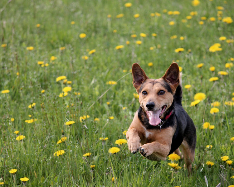 Is glucosamine good for dogs?