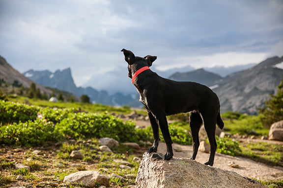 3 Easy Ways to Support the Canine Stifle Joint