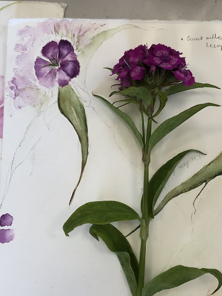 Watercolour Course Painting Seasonal Flowers, LECROPT KIRK HALL, BRIDGE OF ALLAN Friday 7th September - 28th September 2020