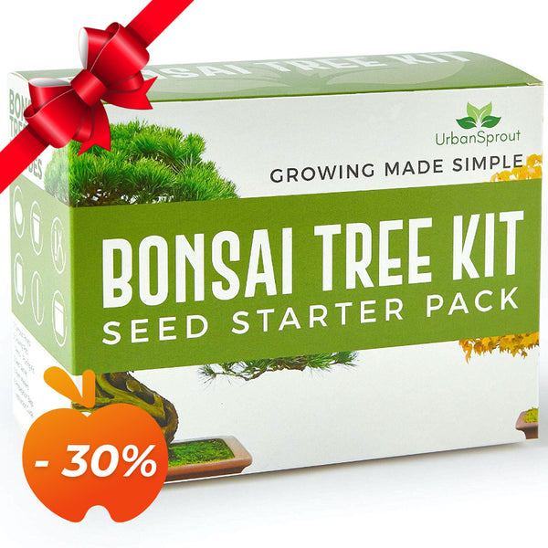 Da seme a bonsai - Kit