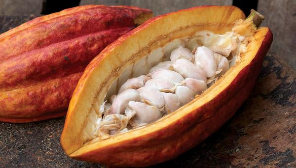 cacao cut in half showing its white meat close up view