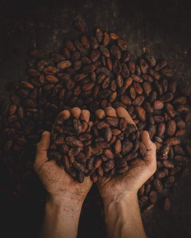hand holding toasted cacao seeds top view