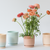 Sunset Porcelain Planters