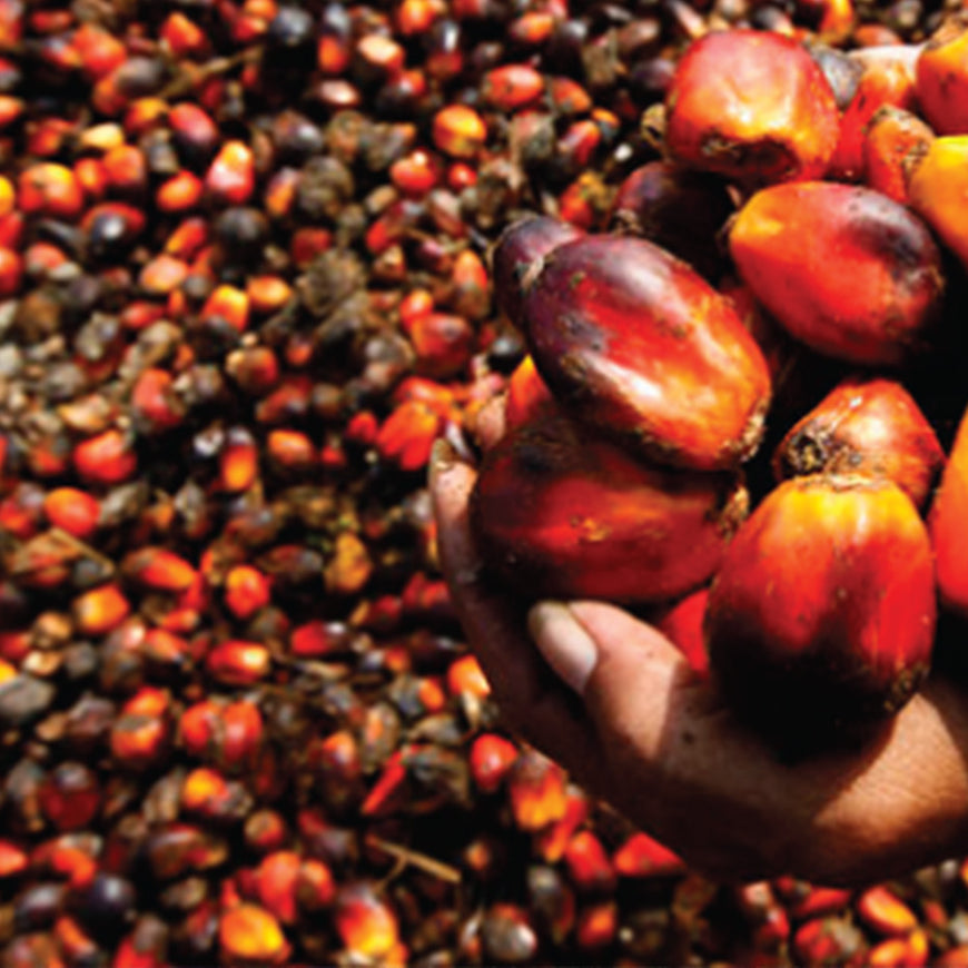 Our Sustainable Palm Oil